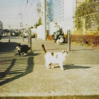 住宅街のネコ