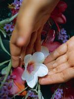 花と手 11000009330  写真素材・ストックフォト・画像・イラスト素材 アマナイメージズ