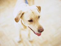 犬 11000009729| 写真素材・ストックフォト・画像・イラスト素材|アマナイメージズ