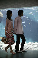 水族館とカップル