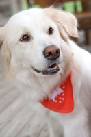 犬 11000017027| 写真素材・ストックフォト・画像・イラスト素材|アマナイメージズ