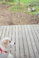 犬 11000017039| 写真素材・ストックフォト・画像・イラスト素材|アマナイメージズ