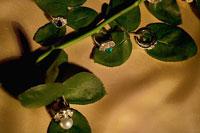指輪 11000019780| 写真素材・ストックフォト・画像・イラスト素材|アマナイメージズ