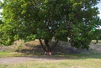 木陰の三人