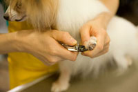 犬の爪を切るペットトリマー