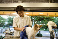 タオルで犬の体を拭くペットトリマー
