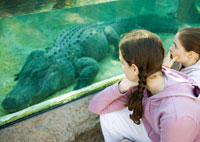 girls looking at alligator through glass