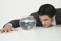 Businessman looking at goldfish in fishbowl 11001056010| 写真素材・ストックフォト・画像・イラスト素材|アマナイメージズ