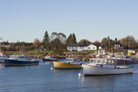 Fishing boats moored in marina near small fishing village in Maine, USA