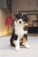 Dog, portrait
