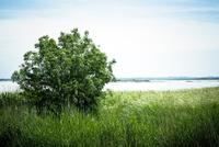 Tree growing on grassy riverbank