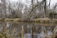Tranquil bayou