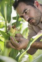 Farmer inspecting corn in field 11001063900| 写真素材・ストックフォト・画像・イラスト素材|アマナイメージズ