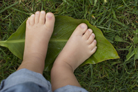Child's bare feet standing on leaf