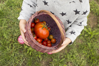 Child carrying basket of freshly picked cherry tomatoes