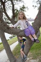Children sitting on tree branches