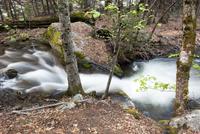 Tranquil stream in Yosemite National Park, California, USA 11001065206| 写真素材・ストックフォト・画像・イラスト素材|アマナイメージズ