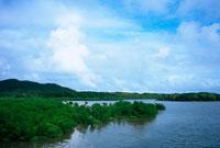 マングローブ 西表島