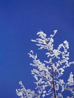 凍った枝と青空 弟子屈 11002027163| 写真素材・ストックフォト・画像・イラスト素材|アマナイメージズ
