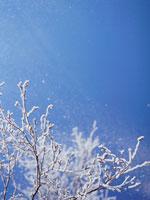 凍った木と青空 弟子屈 11002027169| 写真素材・ストックフォト・画像・イラスト素材|アマナイメージズ