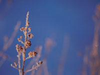凍った枝と青空 弟子屈 11002027183| 写真素材・ストックフォト・画像・イラスト素材|アマナイメージズ