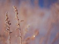 凍った枝 弟子屈 11002027184| 写真素材・ストックフォト・画像・イラスト素材|アマナイメージズ