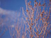 凍った枝と青空 弟子屈 11002027185| 写真素材・ストックフォト・画像・イラスト素材|アマナイメージズ