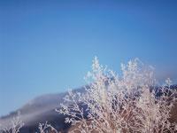 凍った枝と山 弟子屈 11002027186| 写真素材・ストックフォト・画像・イラスト素材|アマナイメージズ