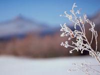 凍った枝と山 弟子屈 11002027188| 写真素材・ストックフォト・画像・イラスト素材|アマナイメージズ
