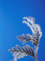 凍った枝と青空 弟子屈 11002027189| 写真素材・ストックフォト・画像・イラスト素材|アマナイメージズ