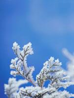 凍った枝と青空 弟子屈 11002027190| 写真素材・ストックフォト・画像・イラスト素材|アマナイメージズ