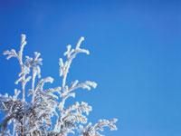 凍った枝と青空 弟子屈 11002027191| 写真素材・ストックフォト・画像・イラスト素材|アマナイメージズ