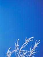 凍った枝と青空 弟子屈 11002027192| 写真素材・ストックフォト・画像・イラスト素材|アマナイメージズ