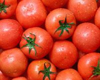 トマト 11002027193| 写真素材・ストックフォト・画像・イラスト素材|アマナイメージズ
