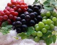 氷上のブドウ 11002027271| 写真素材・ストックフォト・画像・イラスト素材|アマナイメージズ