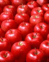 リンゴ 11002027275| 写真素材・ストックフォト・画像・イラスト素材|アマナイメージズ