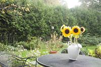 庭と花瓶にささったひまわり