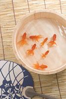 金魚 11002028886| 写真素材・ストックフォト・画像・イラスト素材|アマナイメージズ