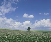 高原と木と青空