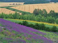 花畑と小麦畑