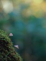 植物(チシオタケ)
