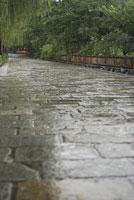 雨の祇園白川