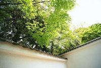 塀の上の植物 11002053253| 写真素材・ストックフォト・画像・イラスト素材|アマナイメージズ