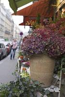 パリの花屋の店先のアジサイ