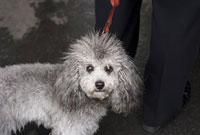 パリの街角の犬