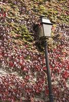 パリの蔦と街灯