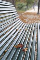 パリのベンチの上の枯れ葉