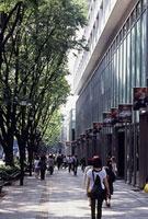 表参道の通りの風景
