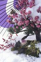 松竹梅 ナンテン ハボタン 11002053592| 写真素材・ストックフォト・画像・イラスト素材|アマナイメージズ