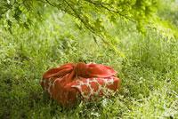 草原の中に置かれた風呂敷包み